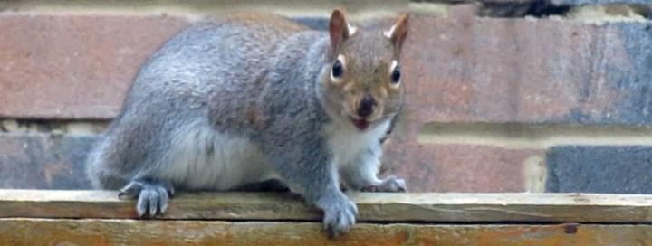 Five Squirrels in Our Garden