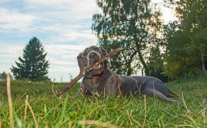 Für Hunde herrscht in der Tourismusregion Oberharz kein Leinenzwang.