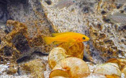 Bunt schillernde Unterwasserwelt: Ist das Aquarium richtig eingerichtet, fühlen sich die Fische wohl.