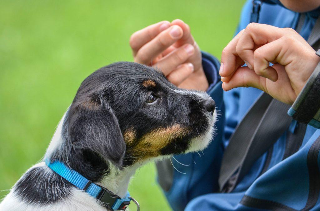 """Hunde können bis zu 250 Worte """"lernen"""" - und verstehen zudem die Gesten ihres Besitzers."""