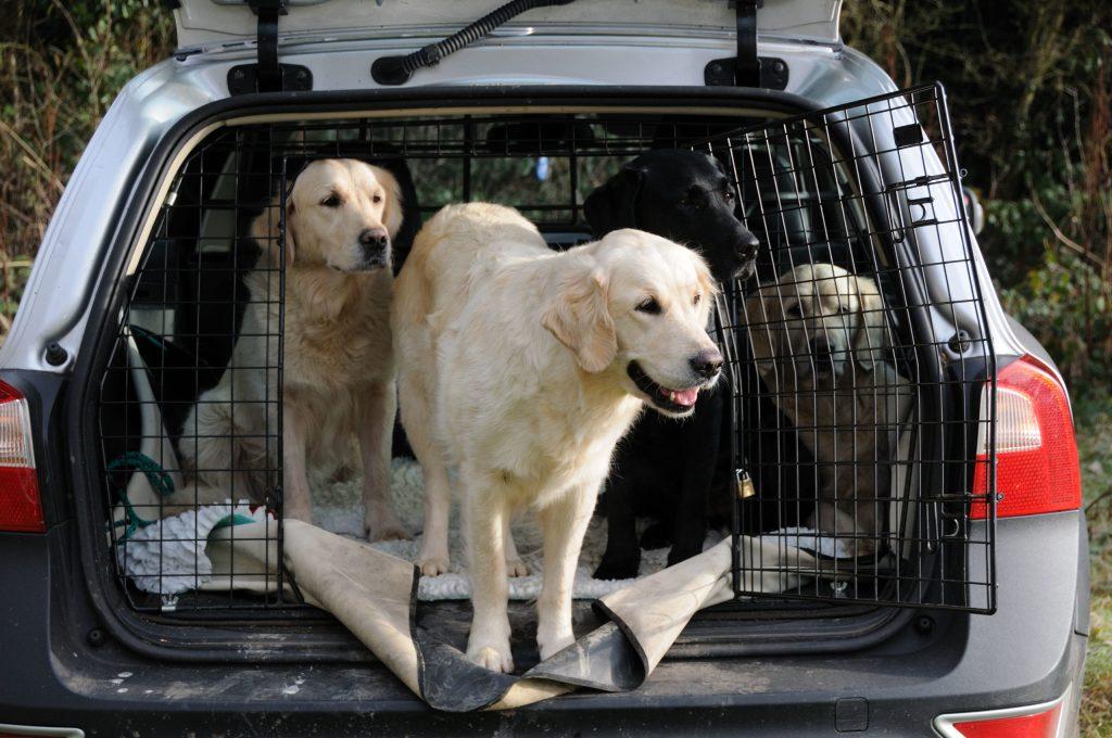 Auch Hunde müssen so sicher wie möglich im Auto untergebracht werden, am besten in Transportboxen