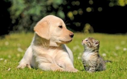 Hunde- und Katzenwelpen können leicht an einer Wurminfektion erkranken. Eine effektive Entwurmung ist daher wichtig.