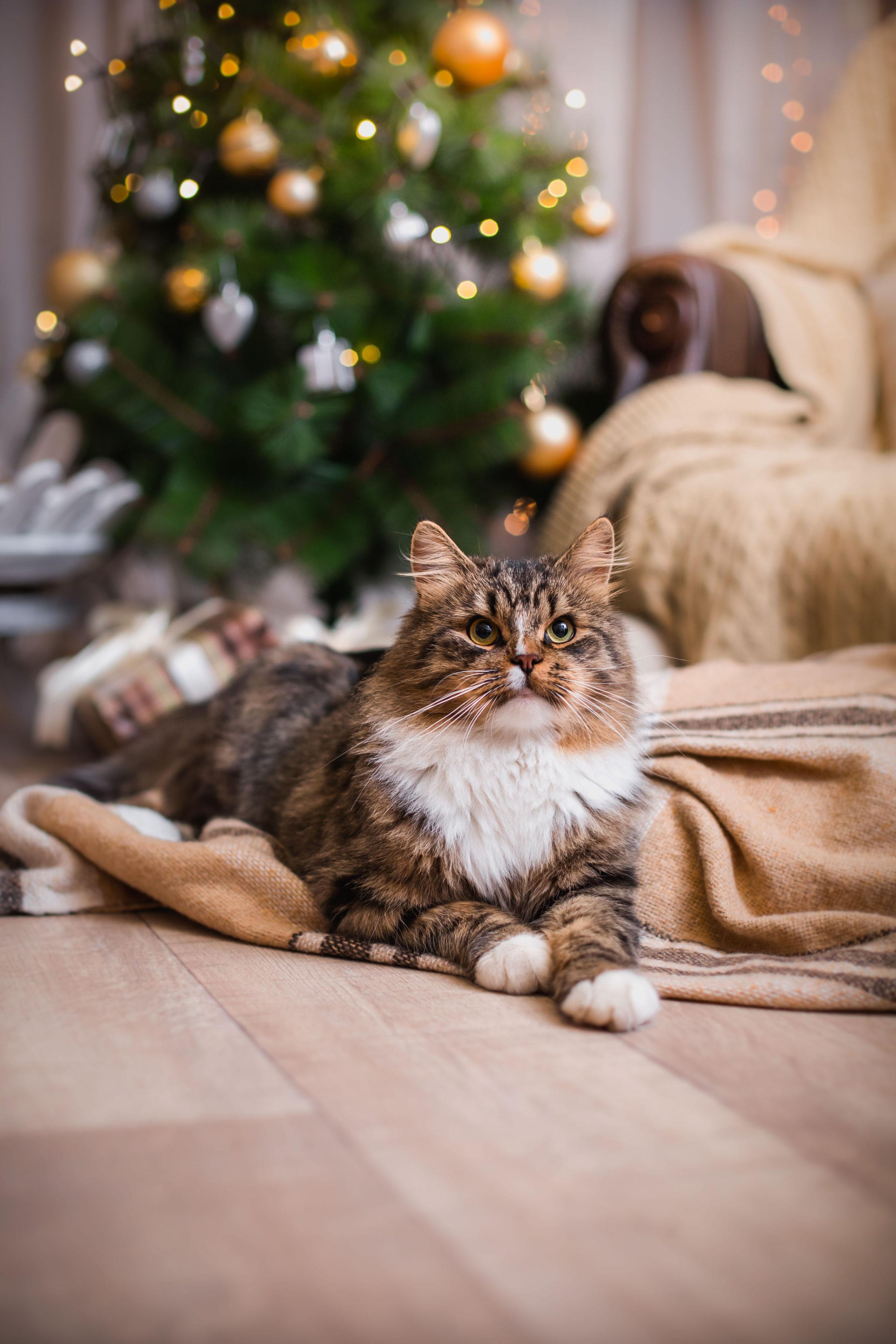 Eine neue Decke zum Kuscheln und Spielen - das sorgt für tierische Freude bei den Samtpfoten.