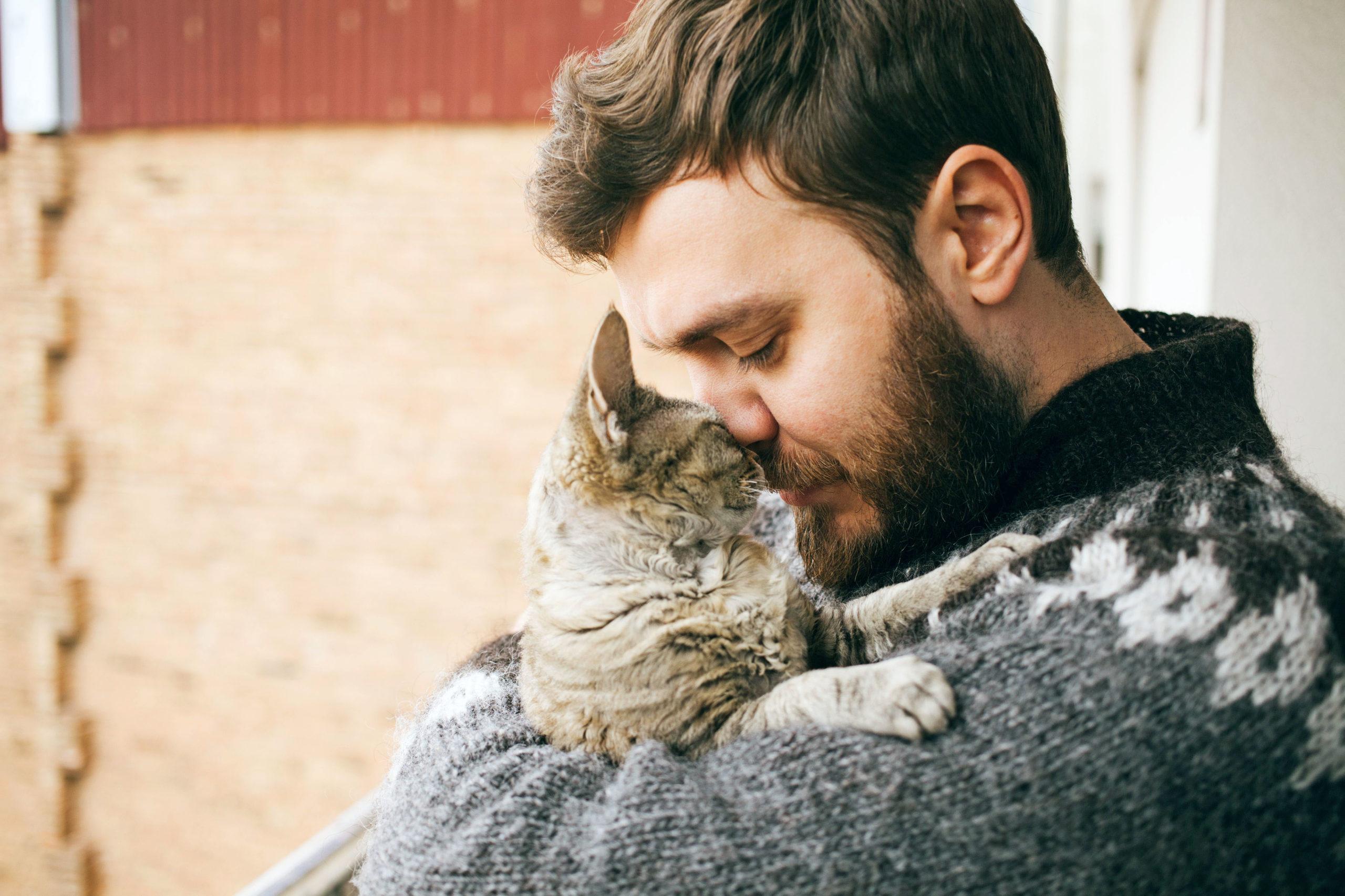 Zuneigung zwischen Katze und Mensch