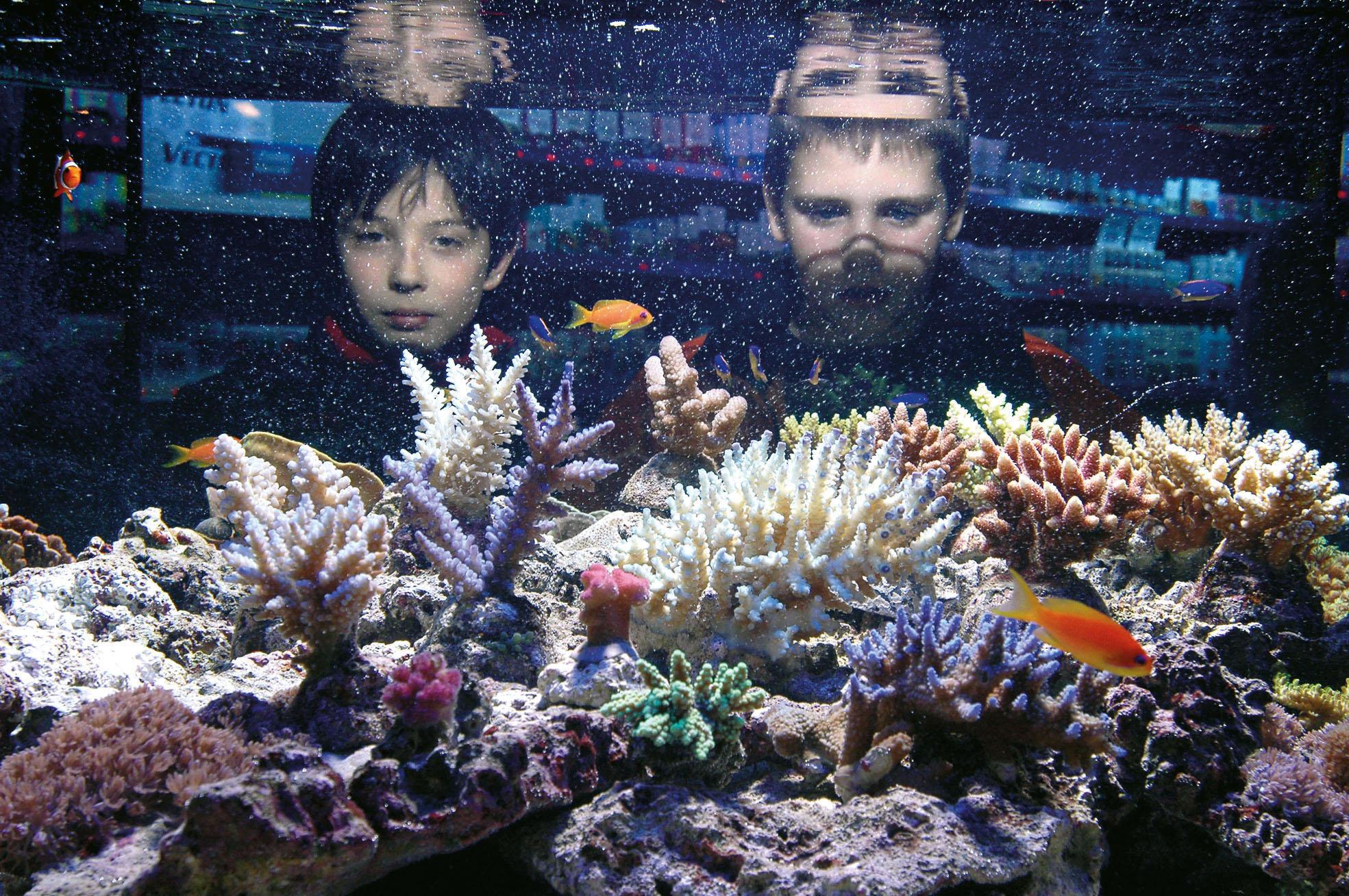 Aquariumfische werden beobachtet