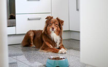 Hunde richtig füttern