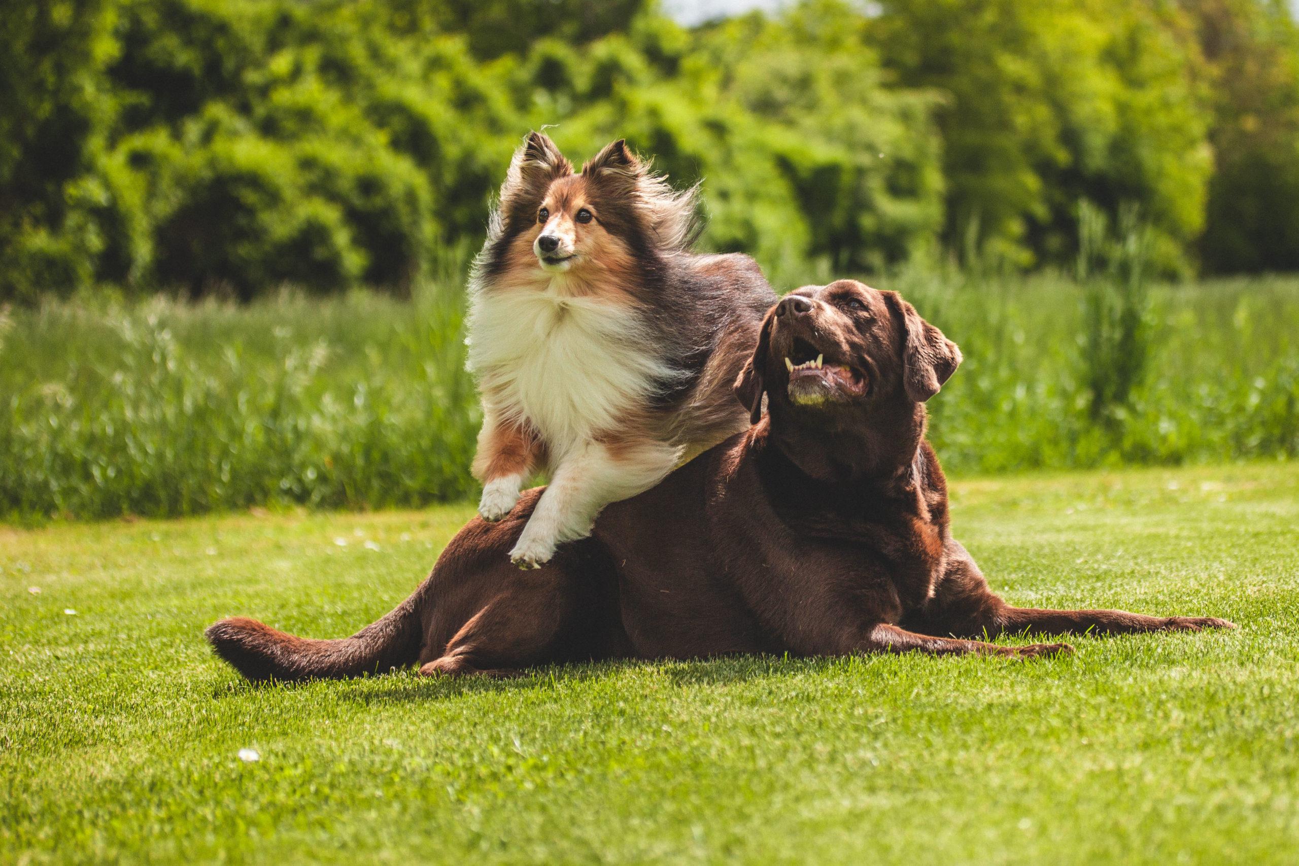 Fitte Hunde durch Futterkohle