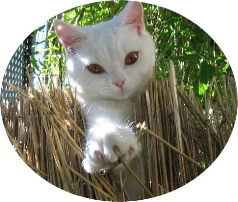 Sie suchen einen Katzensitter / Tiersitter in Hamburg? GOLD CAT Katzenbetreuung Hamburg ist für Sie da! Unsere Katze Maja