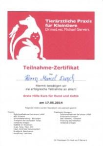Quailfikation GOLD CAT Katzenbetreuung Hamburg Marcel Danch Erste Hilfe Kurs für Katzen