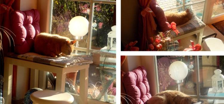DIY-Katzen-Fensterliegeplatz