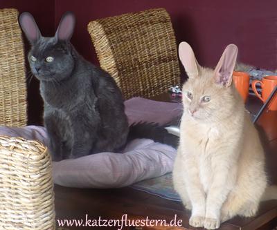 Frohe Ostern von Katzenflüstern