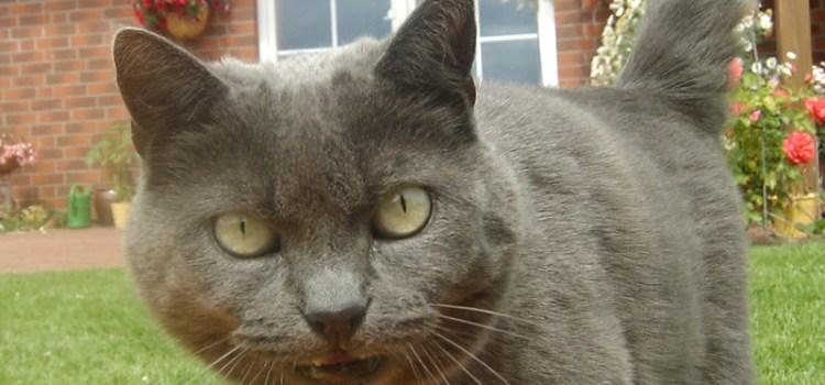 Vorsicht giftig für Katzen