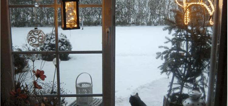 Frohe (Katzen) Weihnachten