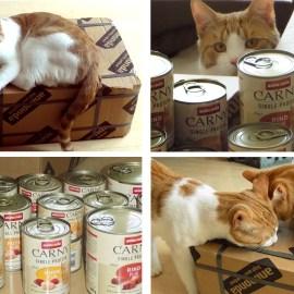 Gesunde Katzenernährung – Produkttest und Gewinnspiel