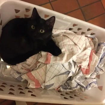 Katze in Wäschekorb