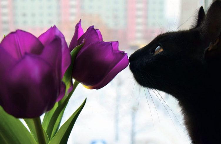 10 Beste Pflanzen Für Katzen Giftig Liste Katzen Wie Wir