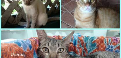 Fotor just cat collage wit names