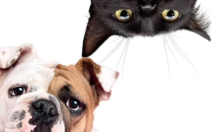 140720-Inside-Cat-Dog-ftr