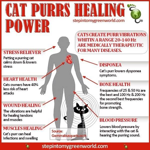 Cat Purrs Healting Power