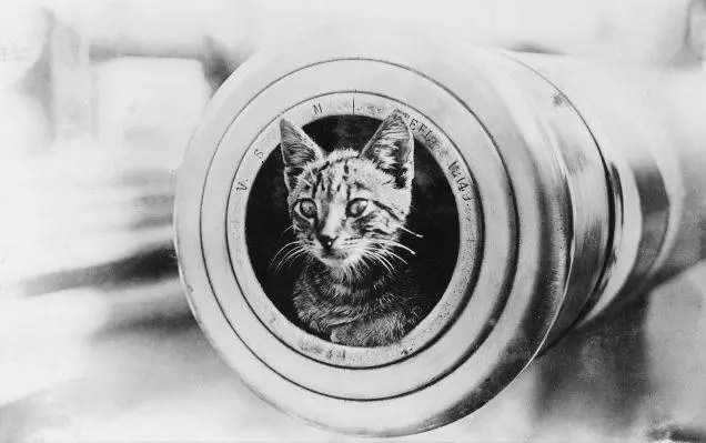 cats of world war 1 - 1