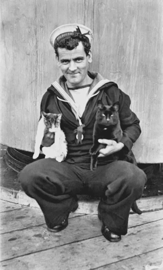 cats of world war 1 - 13