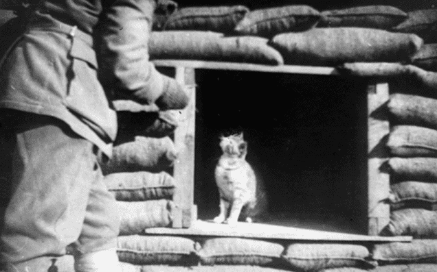 cats of world war 1 - 14