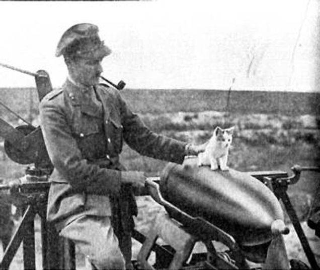 cats of world war 1 - 17
