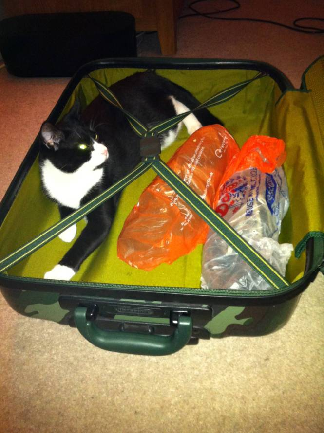 Oliver in suitcase