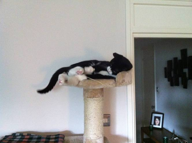 Oliver on scratch tree