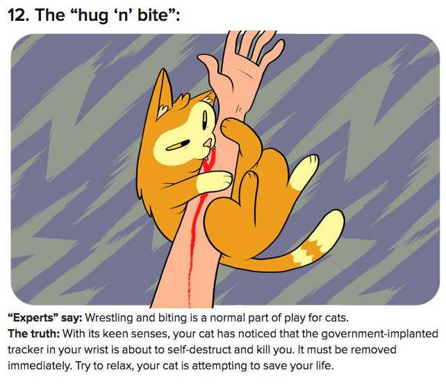 truth-behind-cat-behavior-12