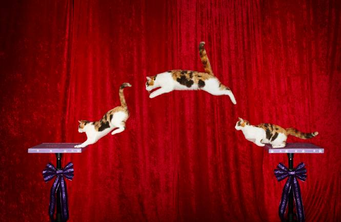 Alley - Longest Jump By A Cat_Action_Sequence