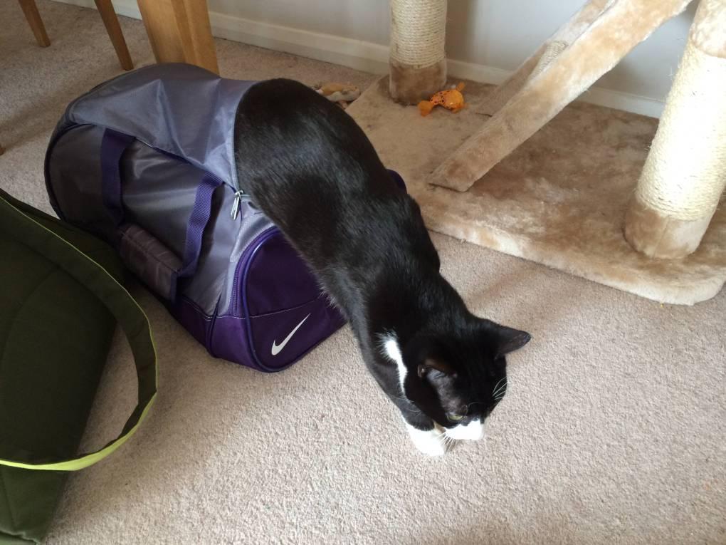 Oliver cat in sport bag 2