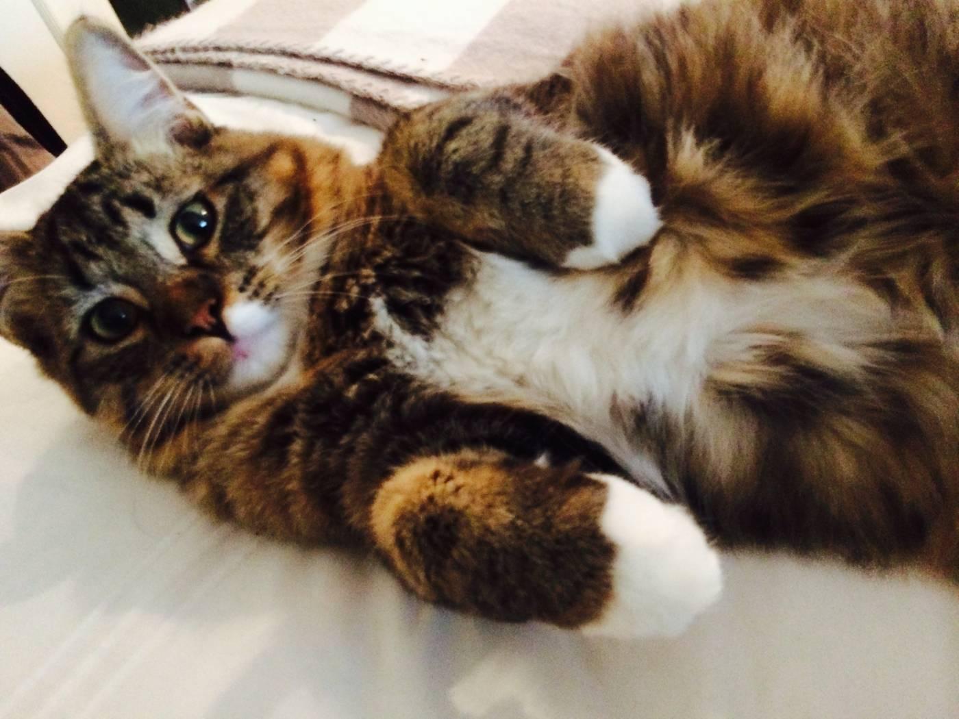 Happy #TRT – Tummy Rub Tuesday (Week 152)