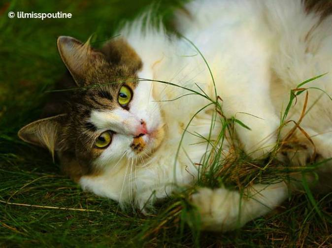 kitty-plays-with-grass