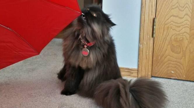 Angel's eyes cat umbrella 2