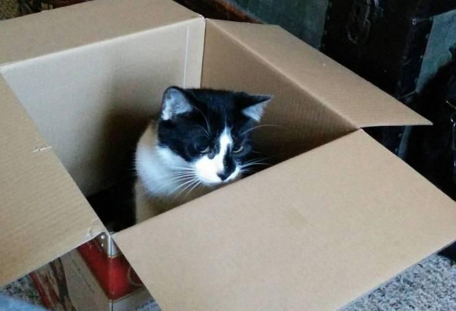 checking the inner perimeter of the cat box
