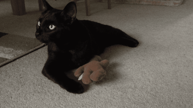 Nubia and 4cats toy