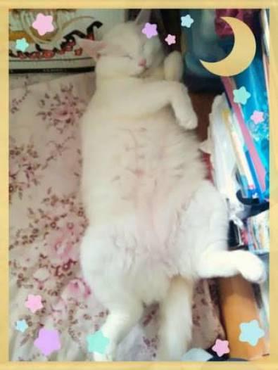 TRT cat from Rainbow Beauty - 1