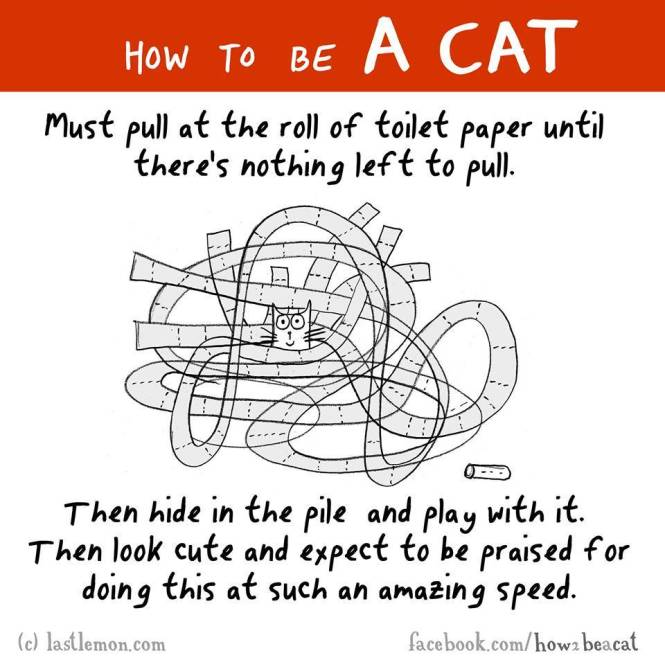How to be a cat 9
