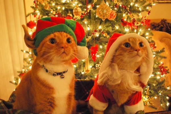 cats_dressed_as_santa_elf_02-600x399