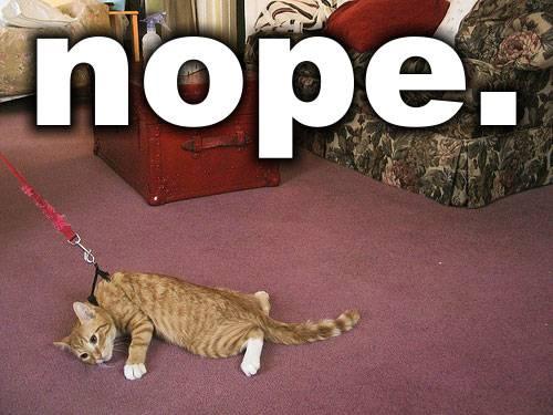 funny-Nope-cat-leash