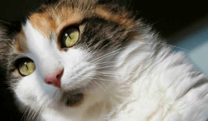 LMF cat