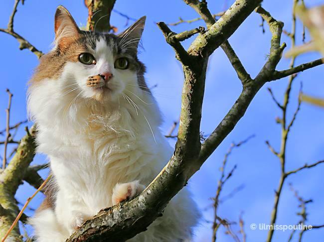 plum-tree-climber
