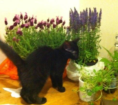 Time to plant your summer blooms, and Cleo thinks that she is Blooming Brilliant!
