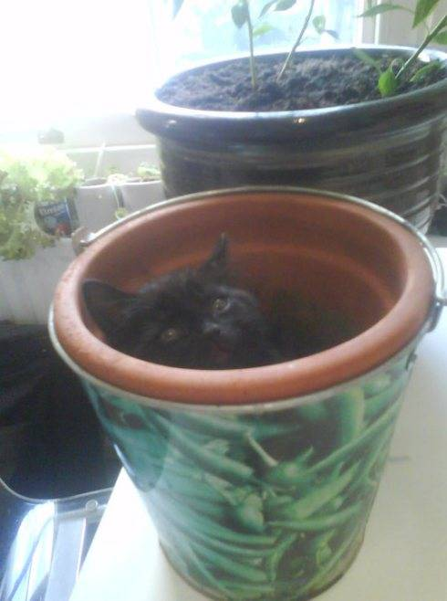 Growing chillis? Well I am hot stuff too you know!