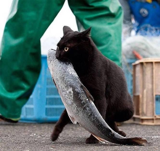 cat with big fish
