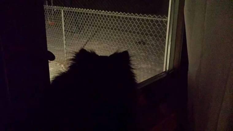 watching the rabbit