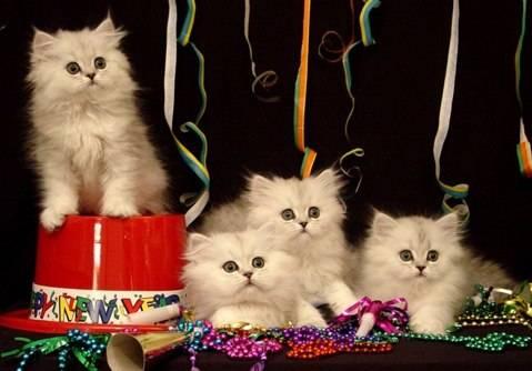 happy-new-year-cat-5