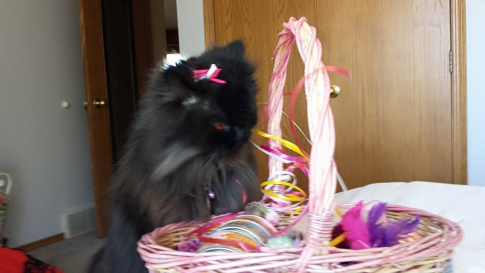 excited with basket