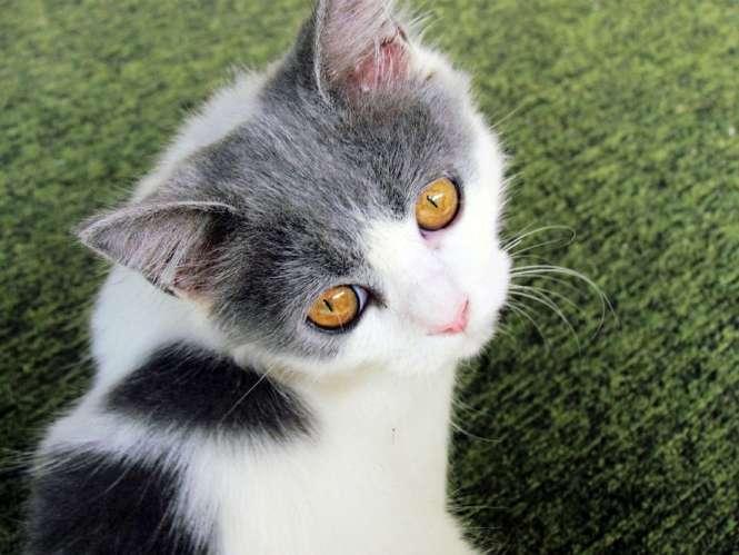 Should I get another cat or dog FOR KATZENWORLD_html_4bdb9277-1